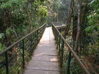ジャングル廊下.JPG