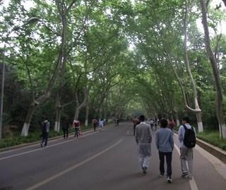 木陰の道.jpg