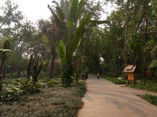 熱帯風景1.JPG